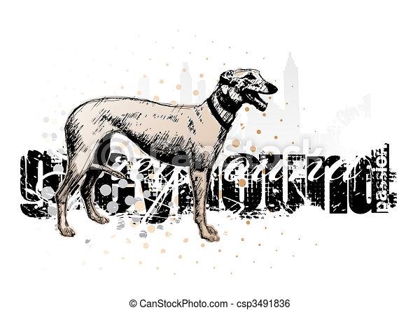 grey  hound - csp3491836