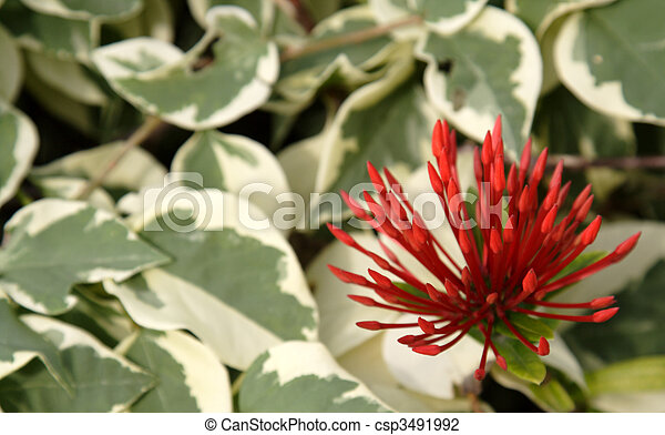 Tropical Red Spiky Flowers - csp3491992