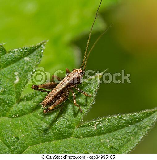 Bush Cricket - csp34935105