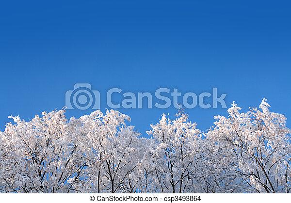 ice winter woods under sky - csp3493864