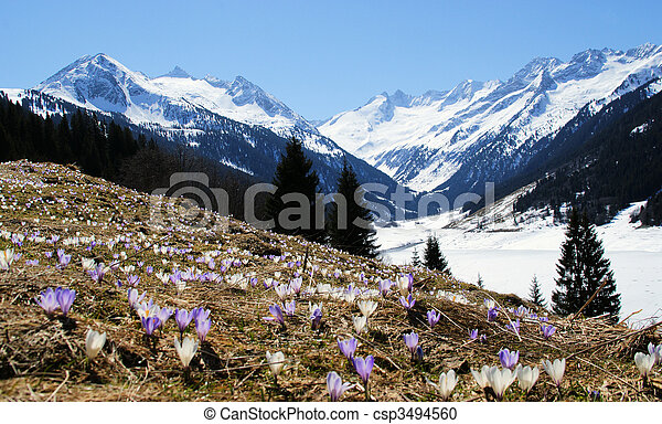 A beautiful mountain landscape with a flower meadow in the foreground. - csp3494560