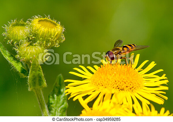 Hoverfly - csp34959285