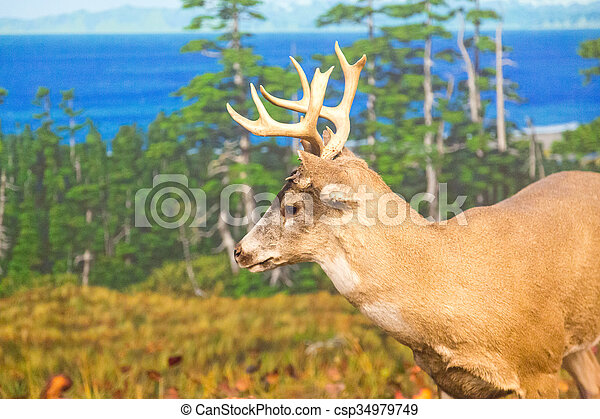 Deer with Lake in Background - csp34979749