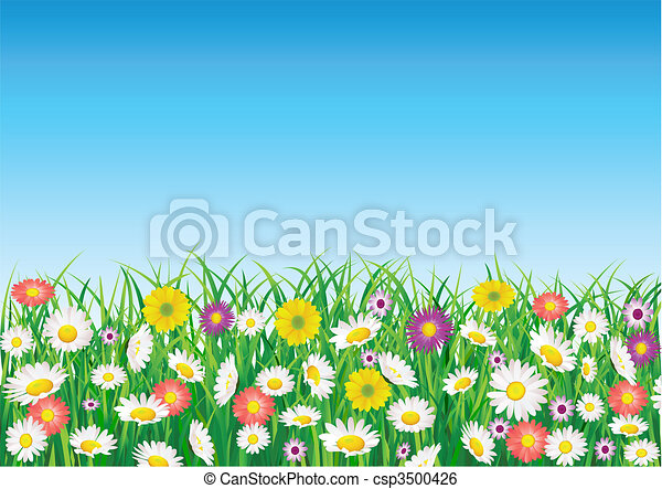 Flower field - csp3500426