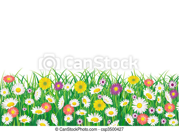 Flower field - csp3500427