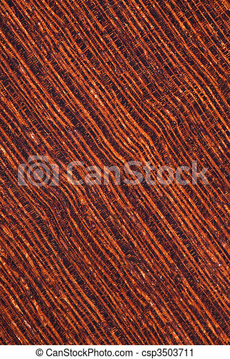 background of wenge tropical timber - csp3503711
