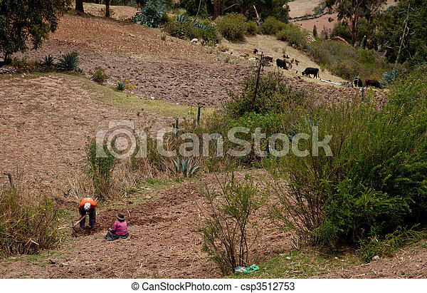 Agriculture in the Andes of Peru, South America - csp3512753