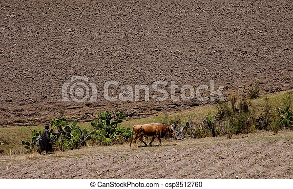 Agriculture in the Andes of Peru, South America - csp3512760