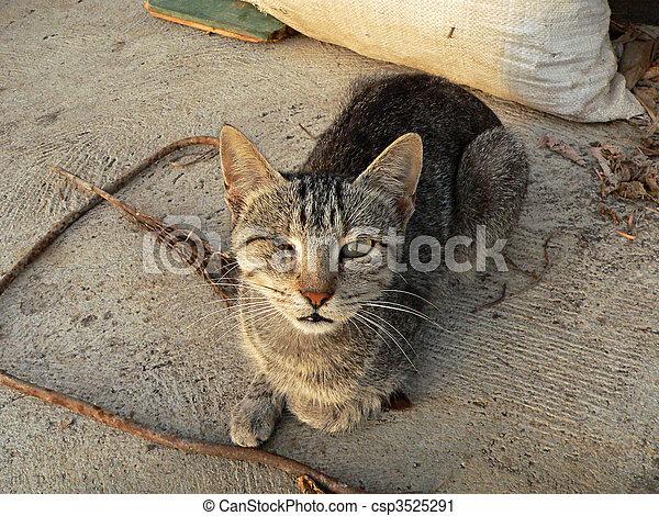 Abused Cat - csp3525291