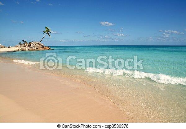 tulum mayan riviera tropical beach palm trees - csp3530378