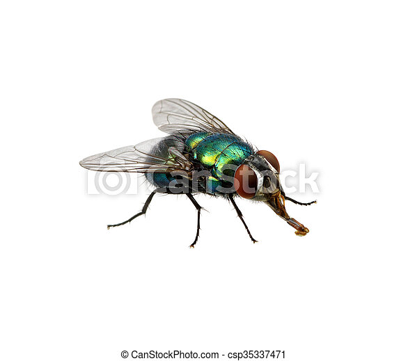 Verde Mosca 35337471