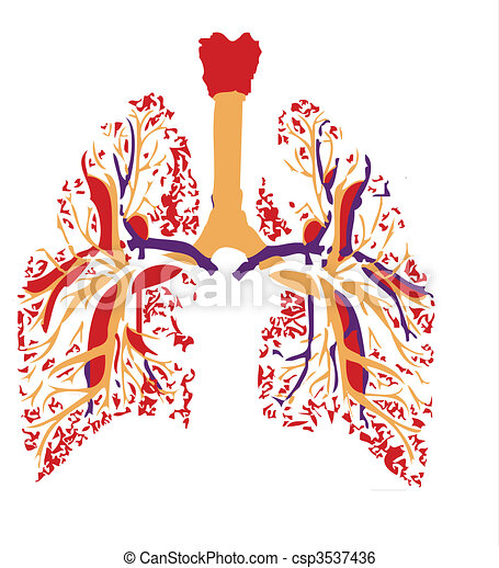 lungs - csp3537436