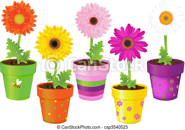 Daisies In Pots With Pictures - csp3540523