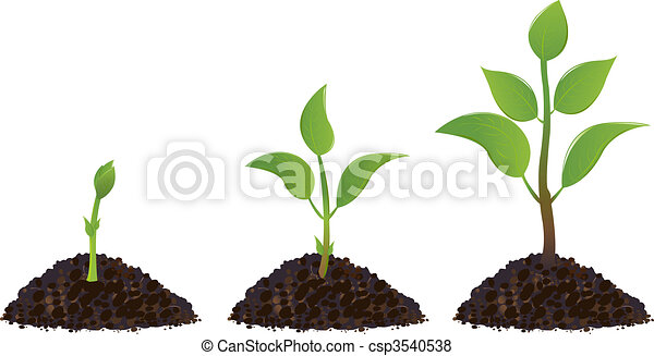 Green Young Plants - csp3540538