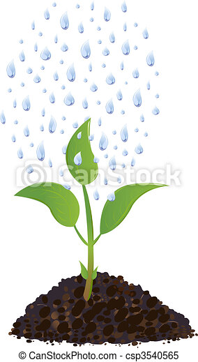 Green Young plant with rain drops - csp3540565