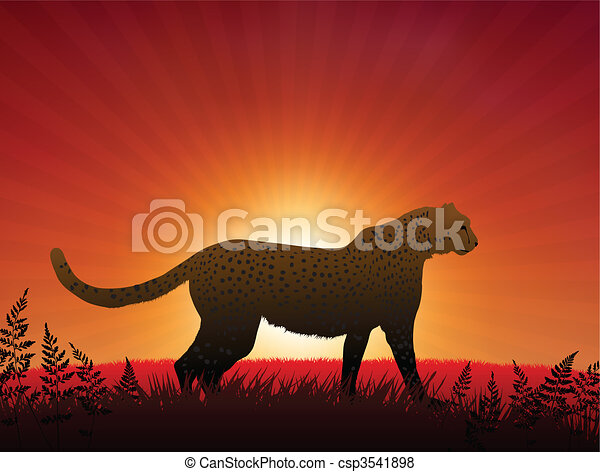 Cheetah on Sunset Background - csp3541898