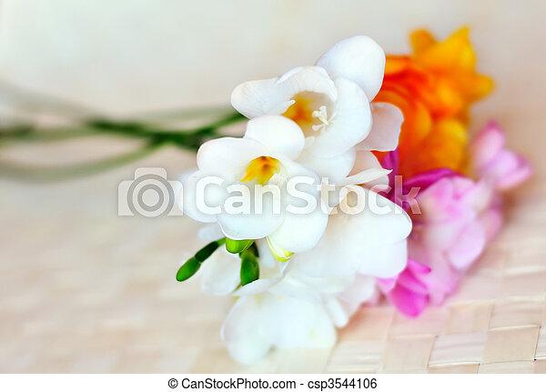 fresh spring freesias in soft focus - csp3544106