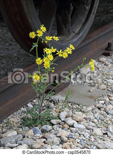 Photographies de fleur mauvaise herbe jaune mauvaise - Mauvaise herbe fleur jaune ...