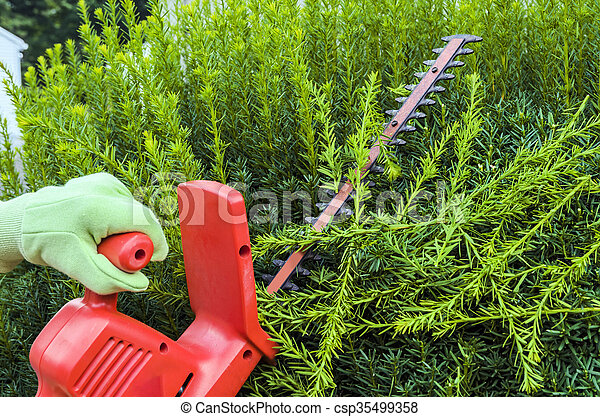 Person Using Electric Clippers to Trim Hedge
