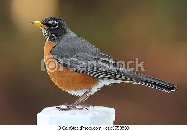 Robin on post - csp3550830