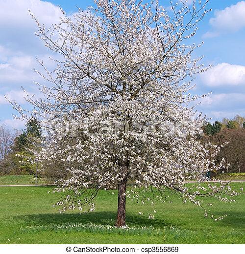Strom třešeň
