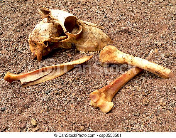 Wasteland Bones - csp3558501