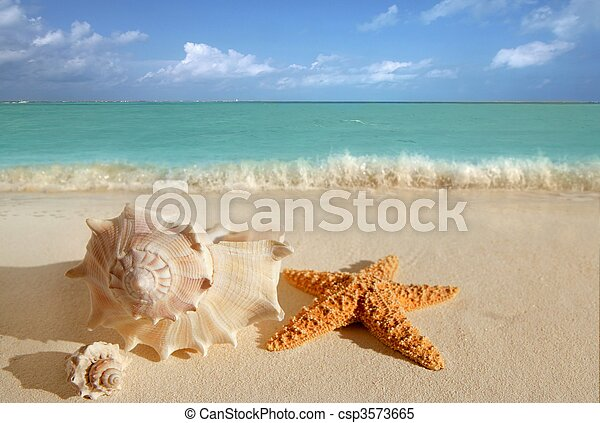 sea shells starfish tropical sand turquoise caribbean - csp3573665