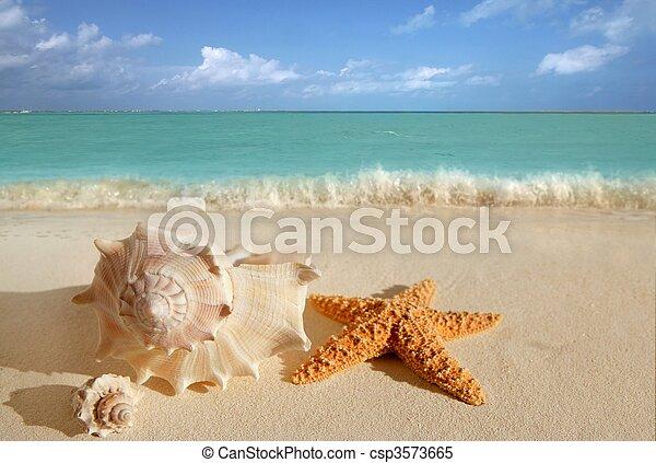 sea shells starfish tropical sand turquoise caribbean - csp3573665