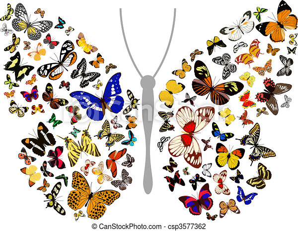 butterfly - csp3577362