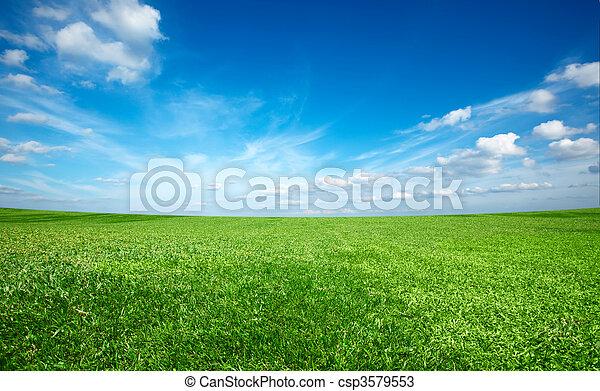 bleu, ciel, champ, vert, sous, frais, herbe - csp3579553