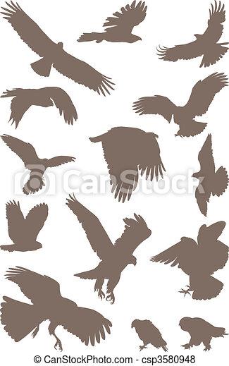 Birds predator - csp3580948