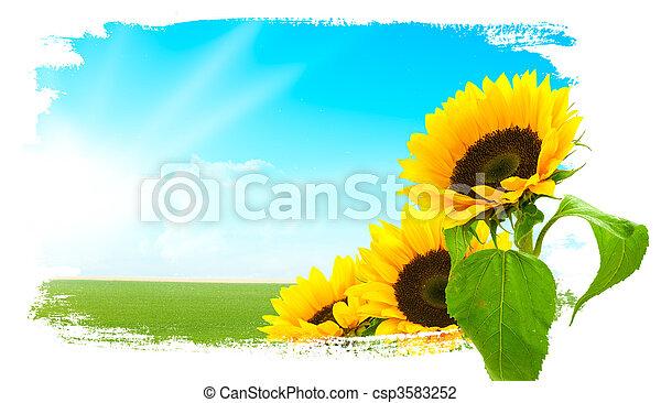 Landscape - sunflowers, green land, blue sky  - csp3583252