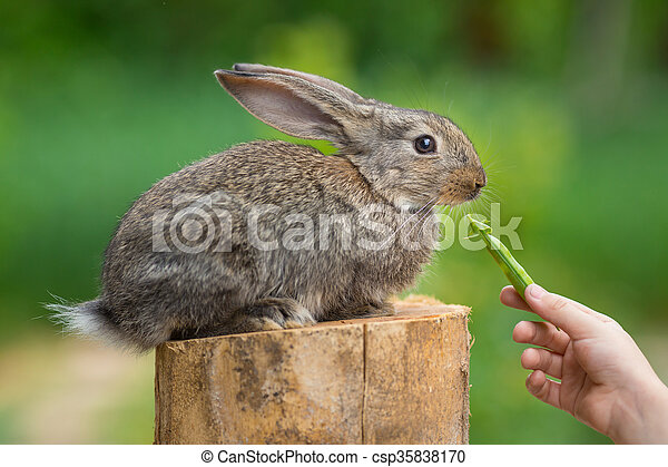 Cute rabbit eating peas from human hands. Healthcare and love to animals concept