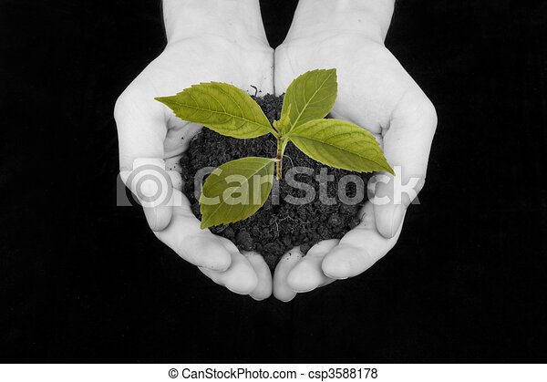 Plant in hand - csp3588178