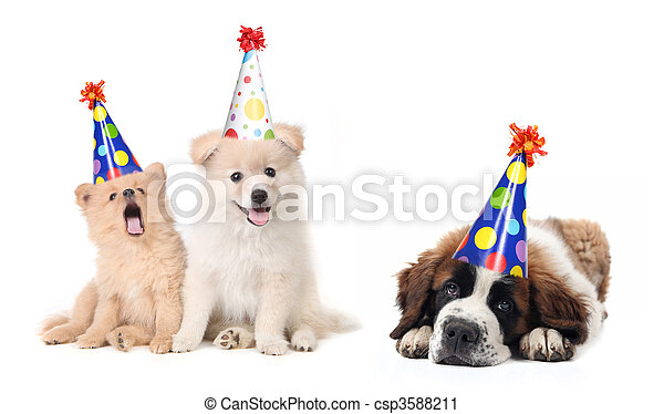 Silly Celebrating Birthday Puppies - csp3588211