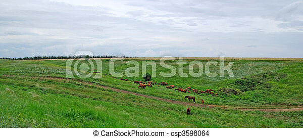 Horses herd in steppe. Animal wildlife landscape. - csp3598064