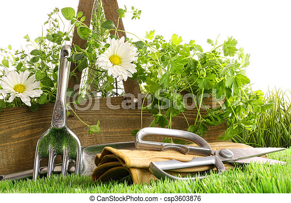 Fresh herbs in wooden box with tools - csp3603876