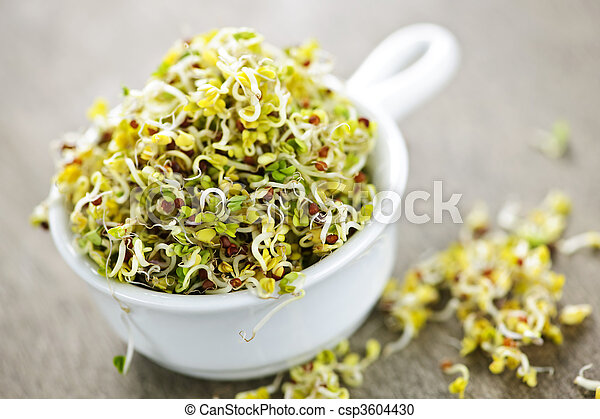 Alfalfa sprouts in a cup - csp3604430