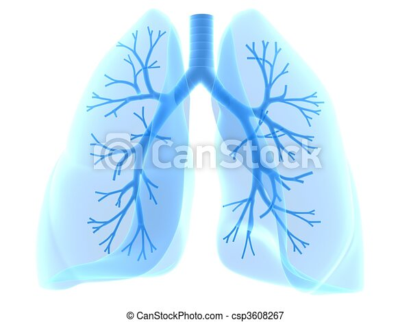 lung and bronchi - csp3608267