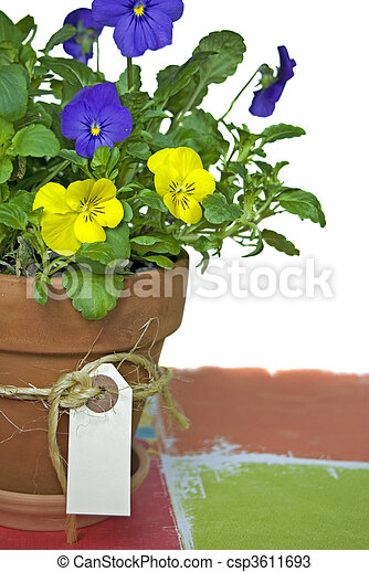 Potted Pansy - csp3611693