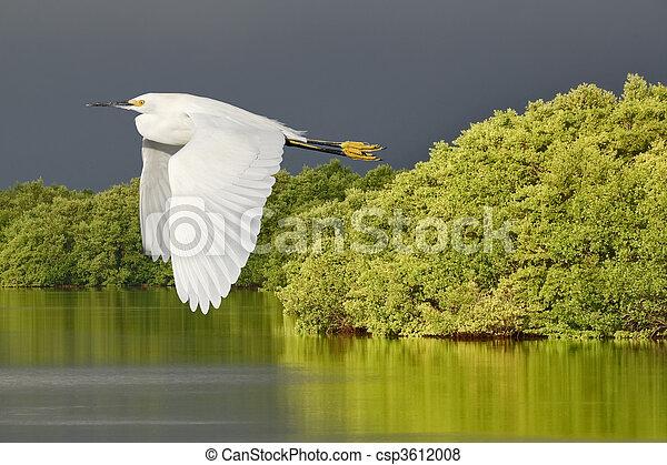 Florida wild birds - csp3612008