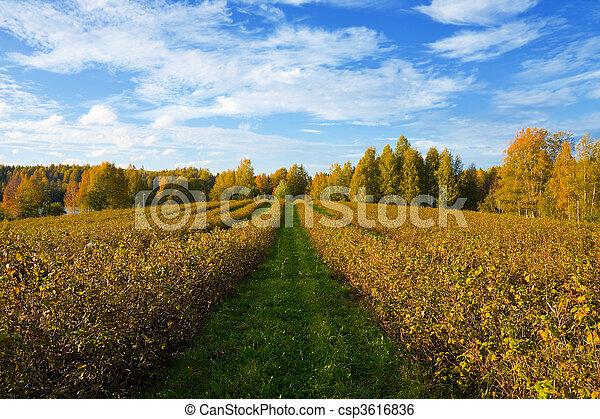 Autumn agricultural landscape - csp3616836