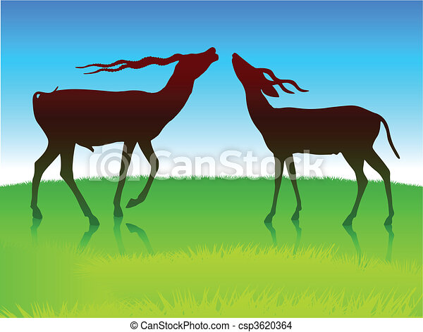 Deer Grazing on Field - csp3620364