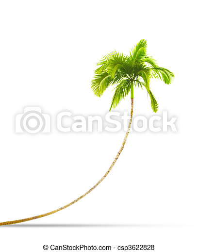 palm tree - csp3622828