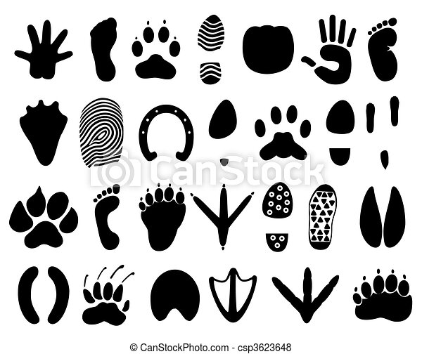 Traces of the person and animals. A vector illustration - csp3623648