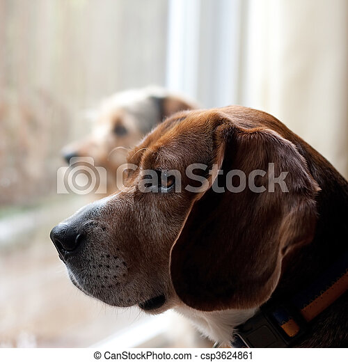 Dogs with Separation Anxiety - csp3624861