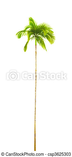 palm tree - csp3625303