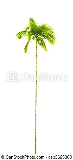 palm tree - csp3625303