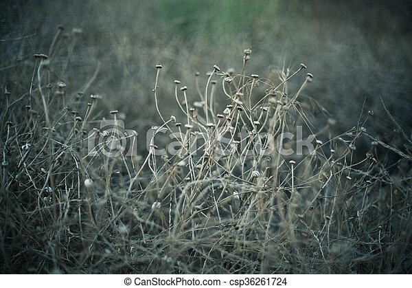 asciutto, estate, grass. - csp36261724