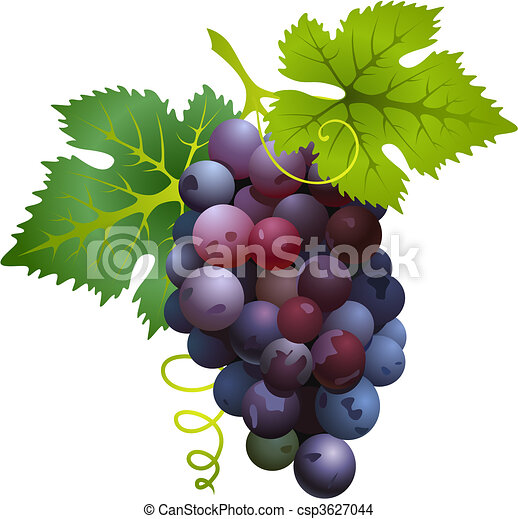 Black grapes - csp3627044